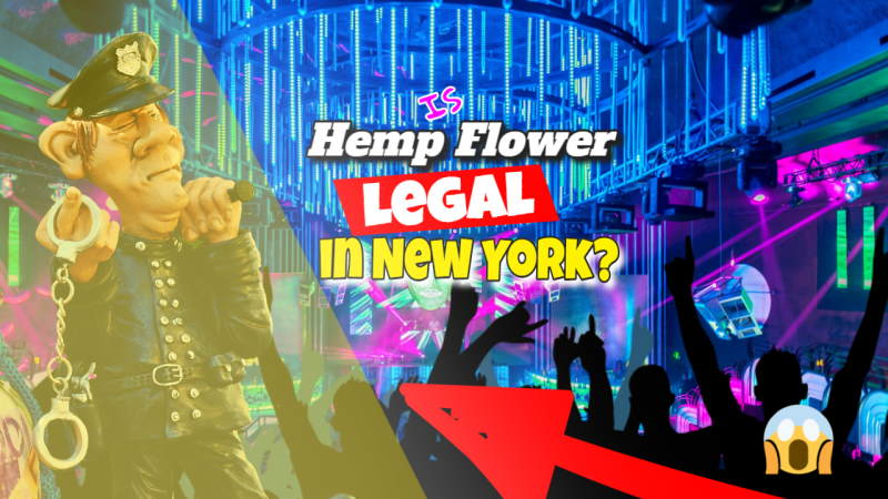 Image illustrates the legality of Hemp in NY