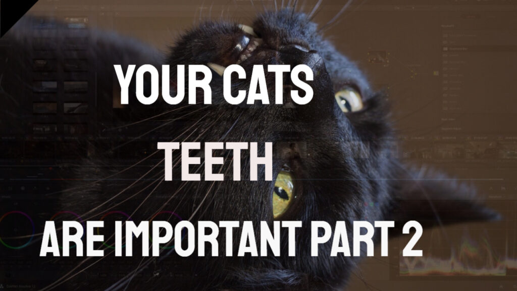 cats teeth black cat