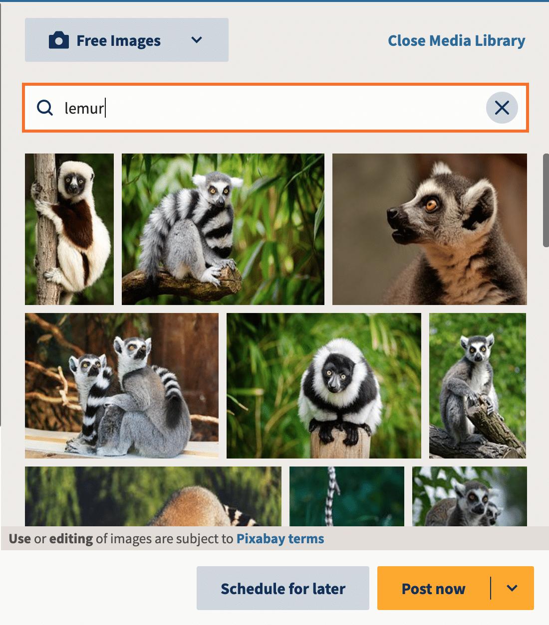 Hootsuite media library lemur images
